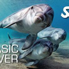 Basic Diver/Try scuba diving
